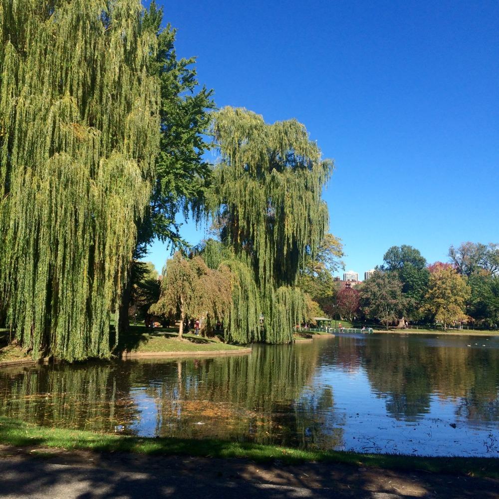 Boston Public Garden views // Her Philly
