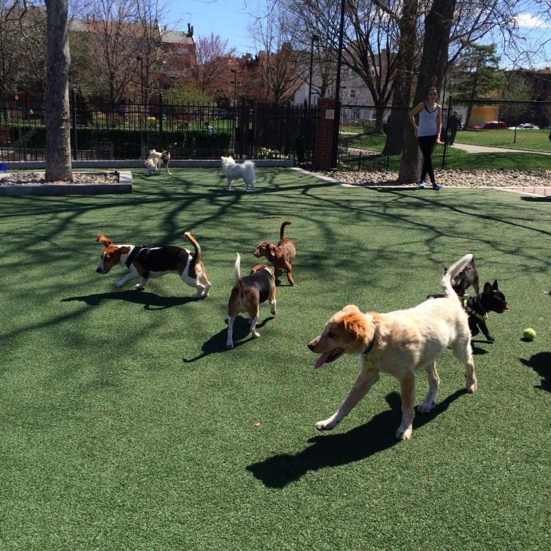 Schuylkill River dog park