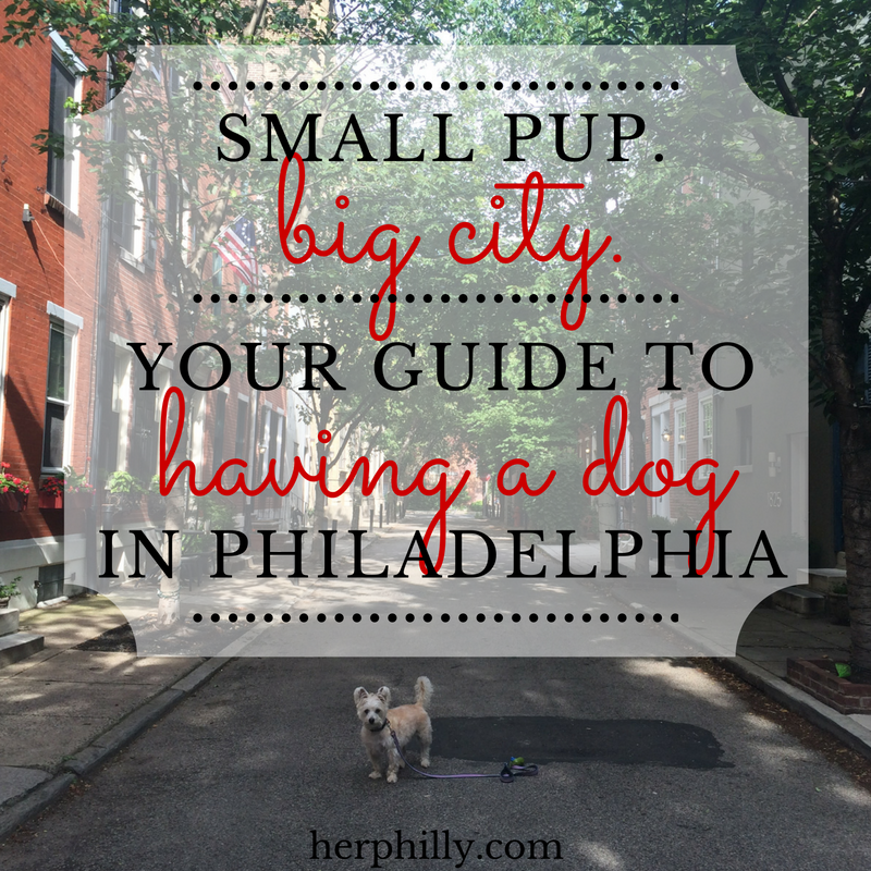 Living in Philly With A Dog