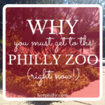 Why You Must Visit the Philly Zoo (Right Now!)